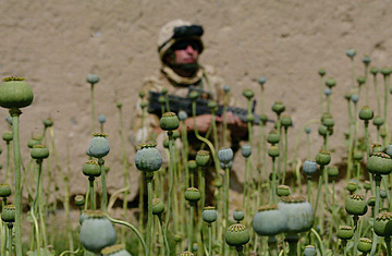 Afghan Heroin Production Up 61% in the Past Year Alone